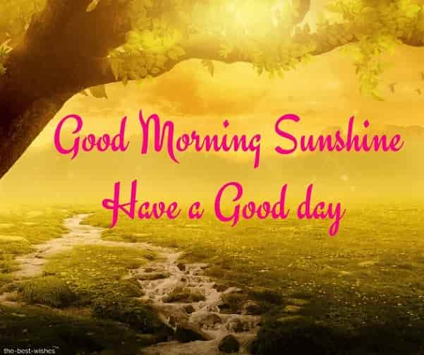 beautiful good morning sun shine images