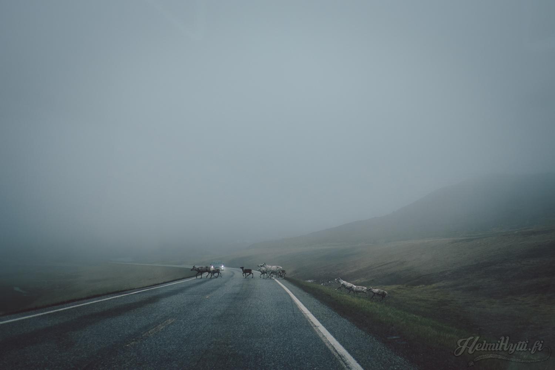 pohjois-norja-roadtrip-vinkit