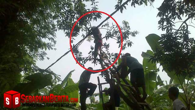 Geger, Wanita Di Bojonegoro Tewas Diatas Pohon Mangga Dengan Kondisi Setengah Bugil
