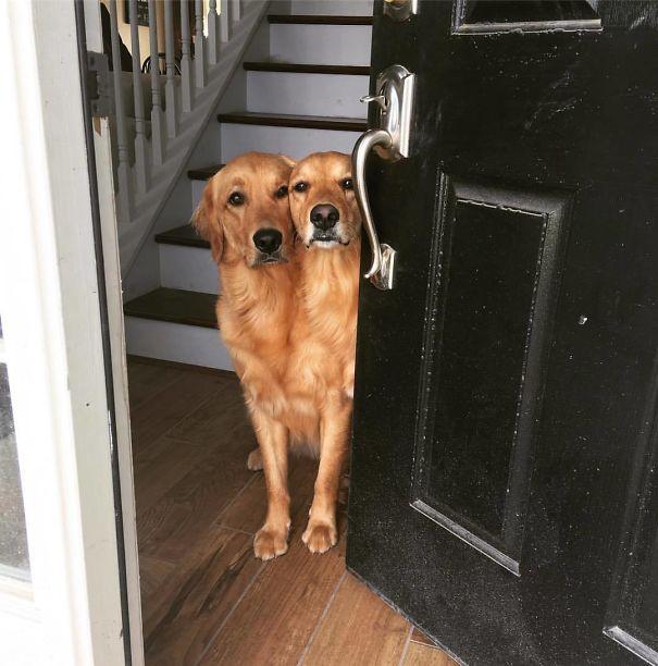 Meus cães parecem ter se fundido esta manhã