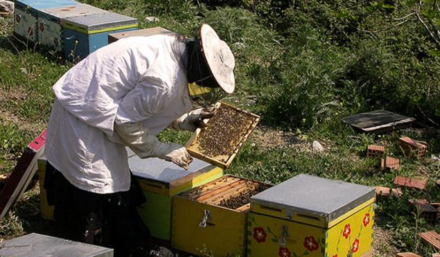 Δείτε τι βρήκε δίπλα στο μελισσοκομείο του: Δεν φαντάζεστε με ποιό τρόπο τον έκλεβαν...