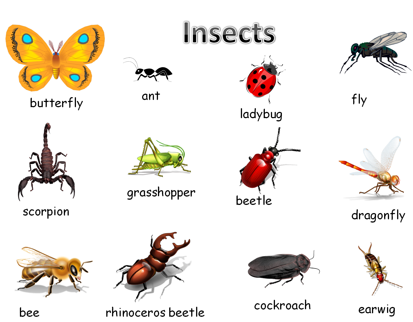 Worksheet On Insects For Kindergarten