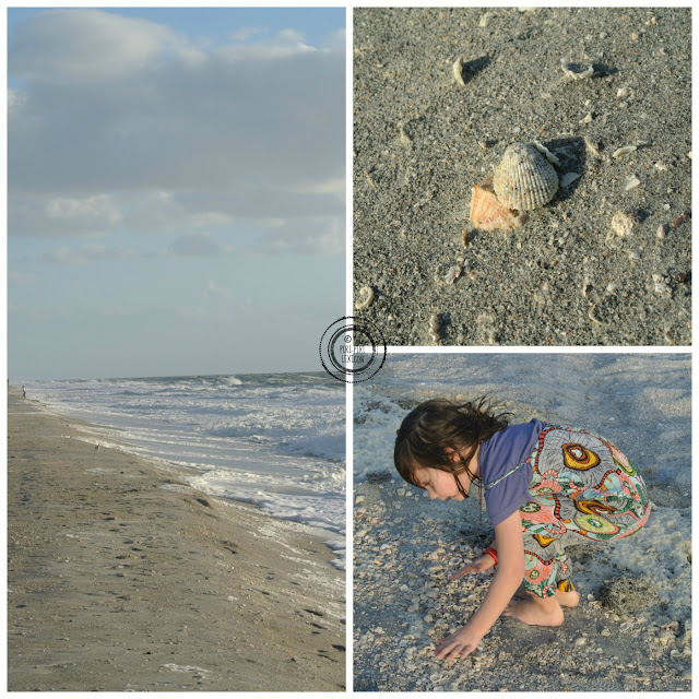 Shell picking in Florida