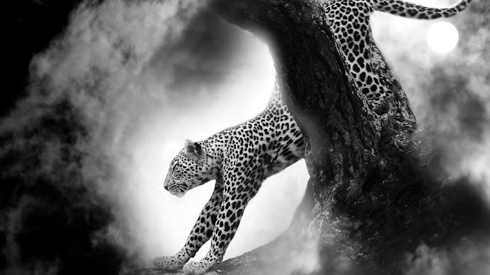 Wallpaper: Leopard under the Moon