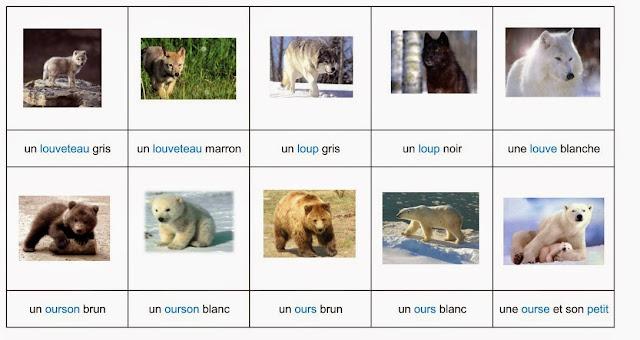 nomenclature animaux de la forêt