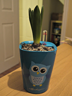 owl, plant pot, hyacinth