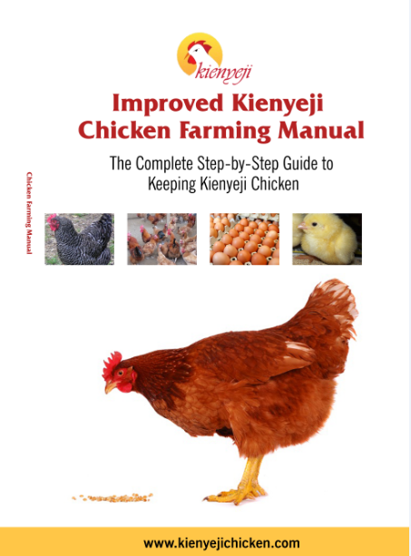 Chicken layers business plan kienyeji