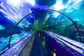 SeaWorld Indonesia, Ancol Jakarta