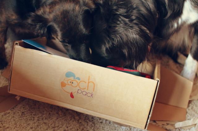 canine-gift-box