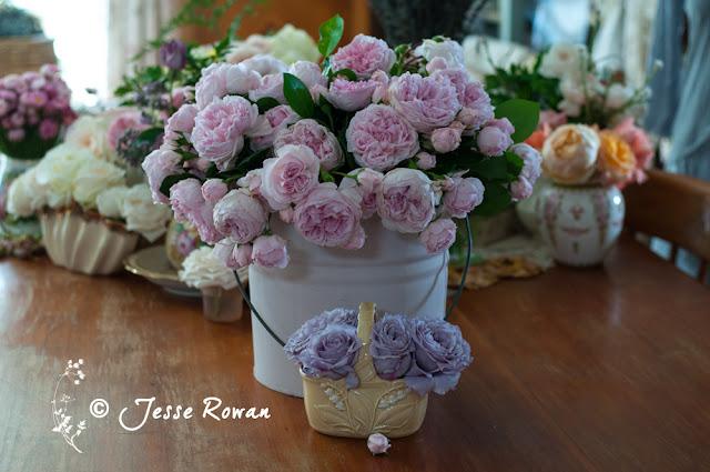 Cinderella roses by Jesse Rowan