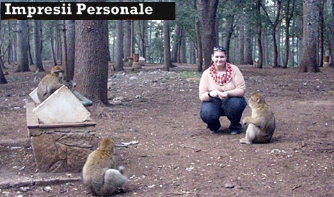 impresii-maroc-maimute