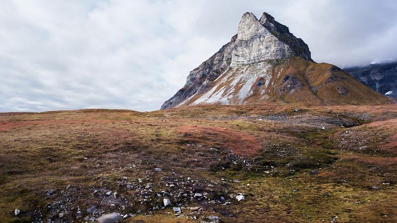Alkehornet, Svalbard