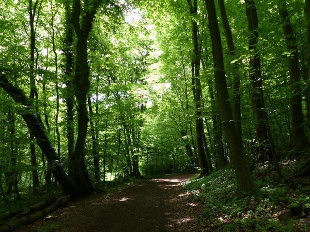 Wanderung Rundweg Bochum Ruhrgebiet Kopf frei bekommen Schritt für Schritt Wald Natur Depression Reizarm Entschleunigung Achtsamkeit Auszeit Haus Weitmar