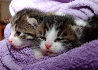 Kucing Ingusan Terkena Flu dan Pilek