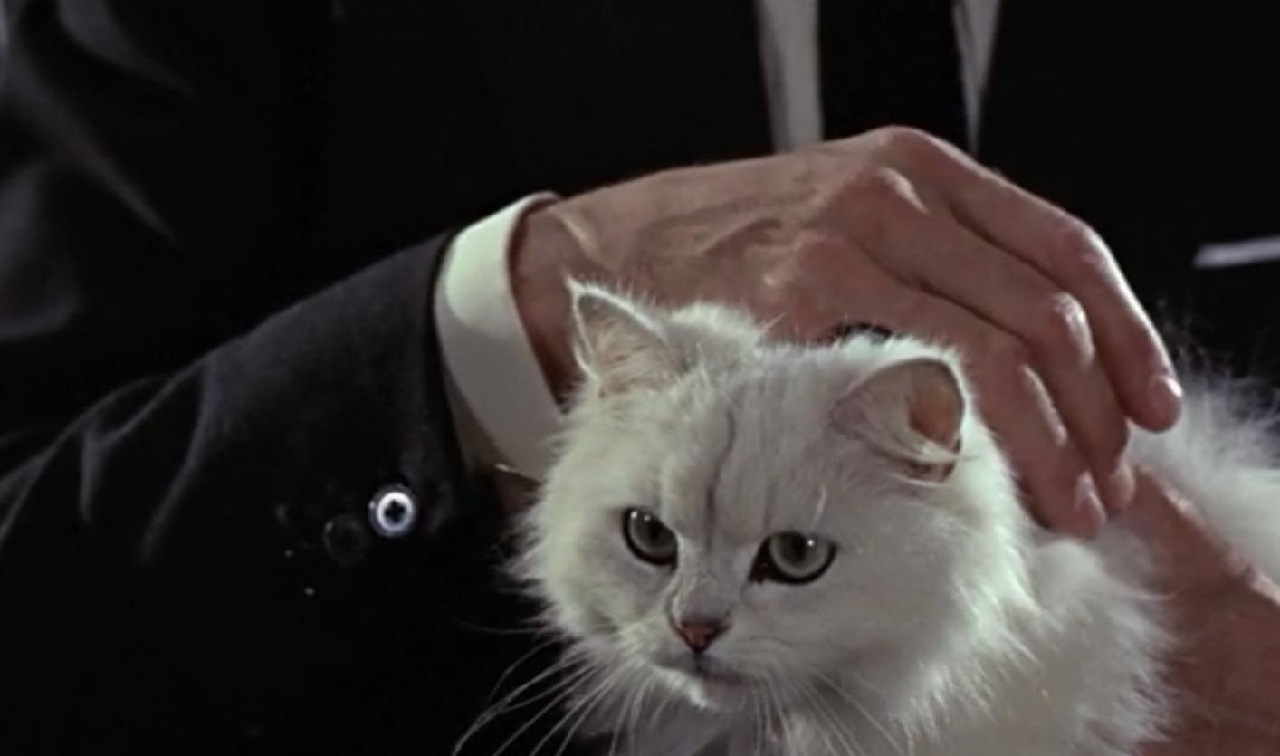 Acidemic - Film: CinemArchetype 15: The Animal Familiar
