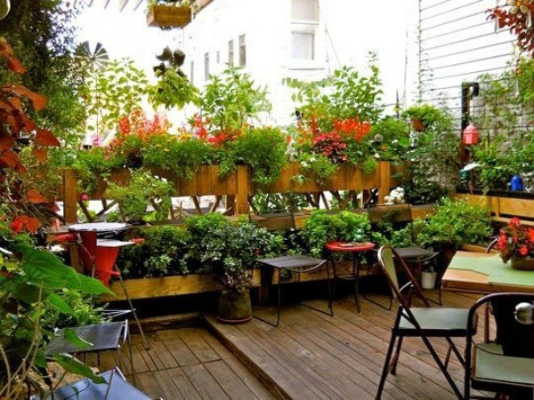 Gardening For Small Space Dwellers  COZY LITTLE HOUSE