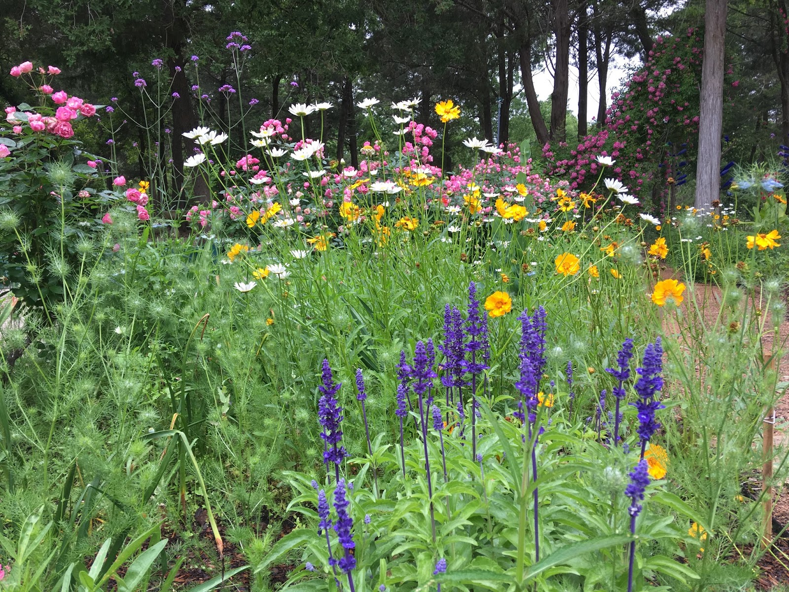 Lisa bonassins garden some pretty flowers in my garden april 22 2018 some pretty flowers in my garden april 22 2018 mightylinksfo