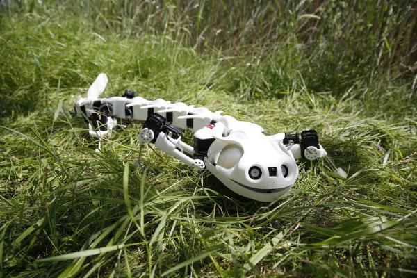 علماء ينجحون في تطوير روبوت على شكل عظاية (فيديو)
