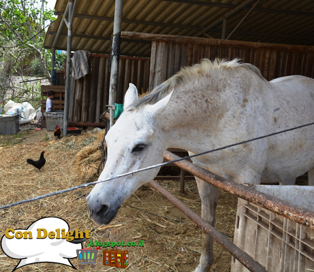 סוס Horse
