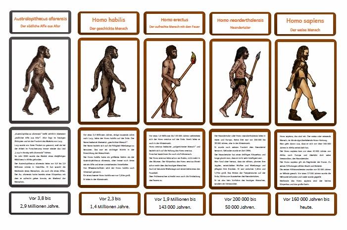 krabbelwiese im ruhemodus entwicklung zum homo sapiens. Black Bedroom Furniture Sets. Home Design Ideas
