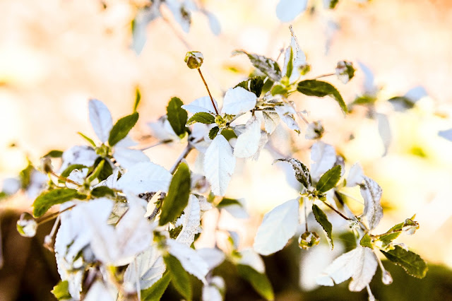 flowers on the Road to Hana