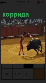 На арене коррида, тореадор вставляет стрелы в быка на виду у зрителей
