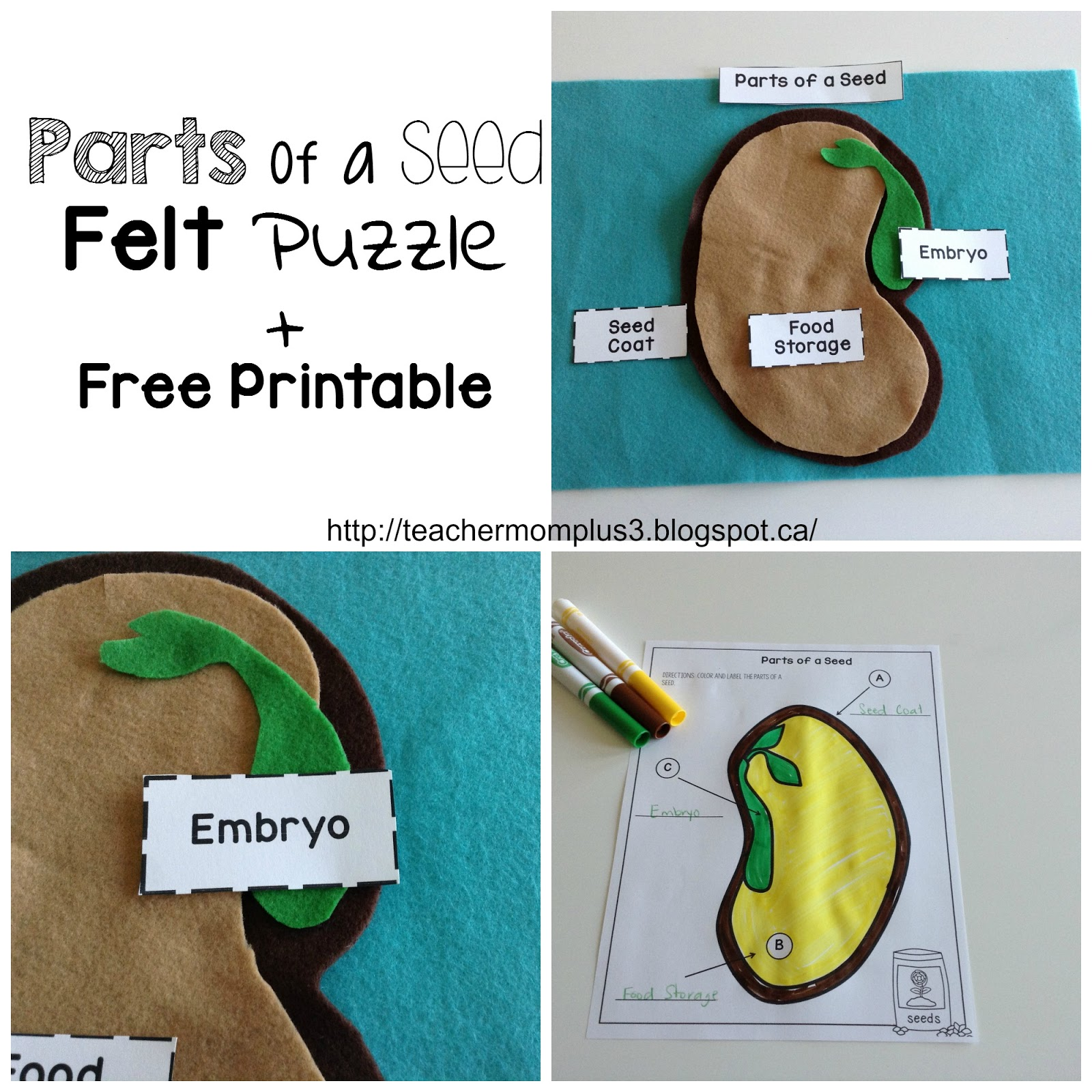 Parts Of Seed Felt Puzzle Free Printable on Parts Of A Seed Worksheet