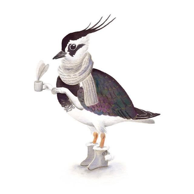 ilustración de pájaros, avefría, aves de la albufera, vanellus vanellus, ilustración de aves, aves acuáticas, garza, Inktober, Inktober 2017,