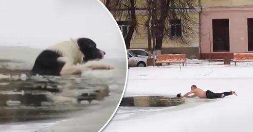 Héroe entró a una laguna helada y rescató un perro