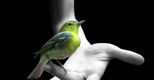 The bird in your hand is the true doctor.