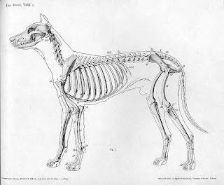 Dog anatomy-dog breeds-pet-pets