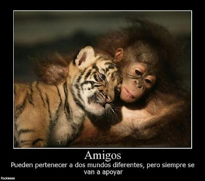 imagenes tiernas animales