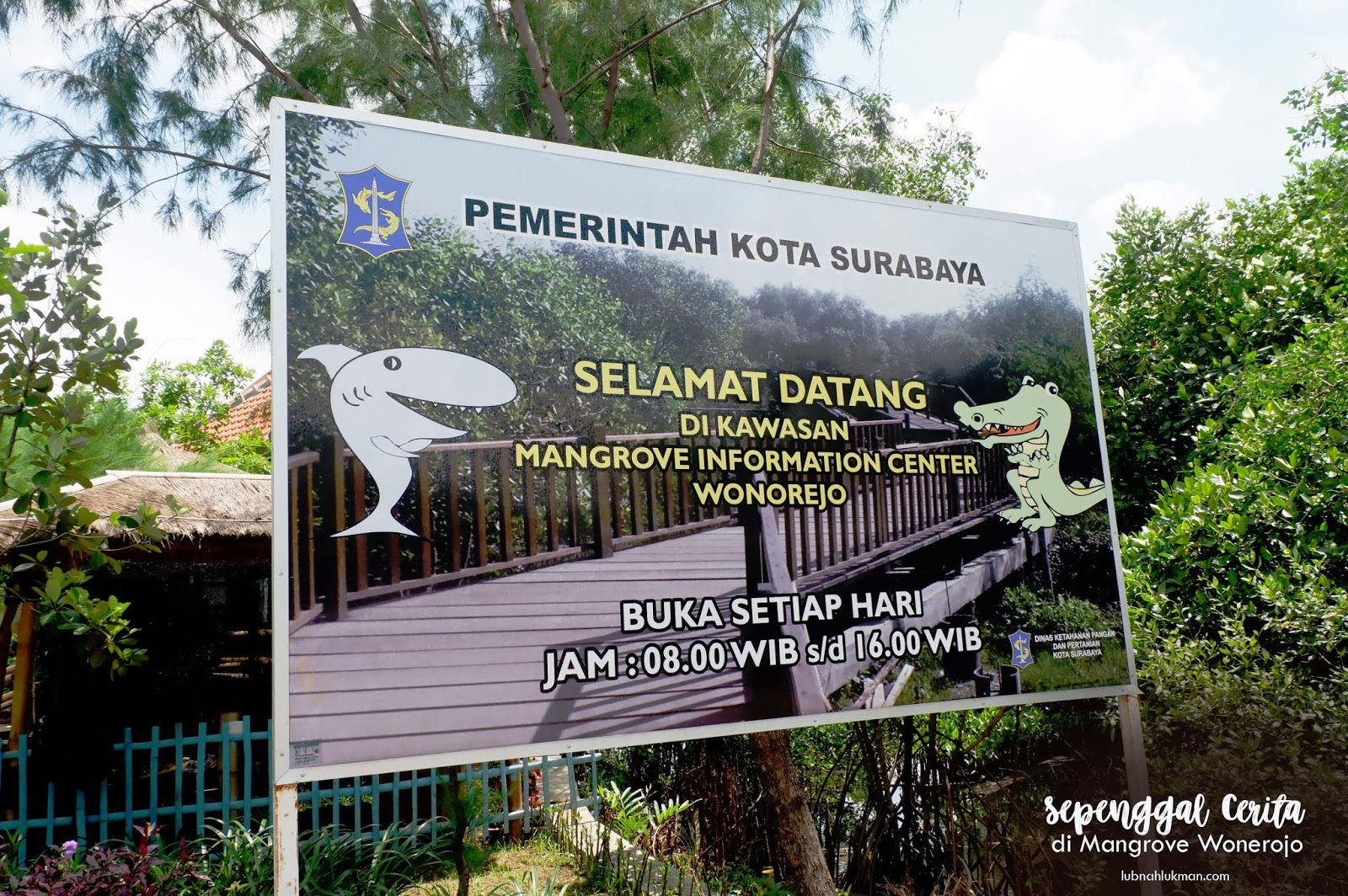 Hutan Mangrove Wonorejo Surabaya