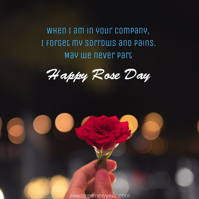Top Happy Rose Day Wishes Messages and SMS