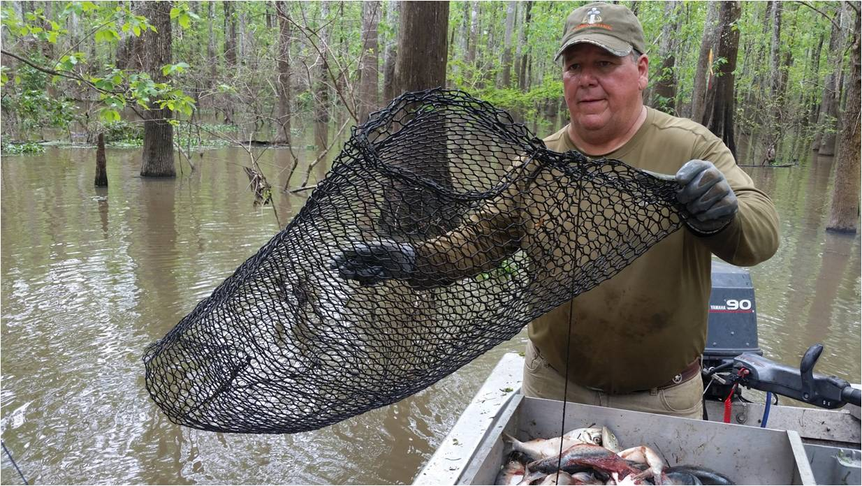 Carlton Legrange Holding A Crawfish Trap That Has Been Run By Mr Otter  Note How It Is Opened So Perfectly On The Trap Door End