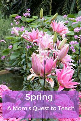 photograph of spring flowers