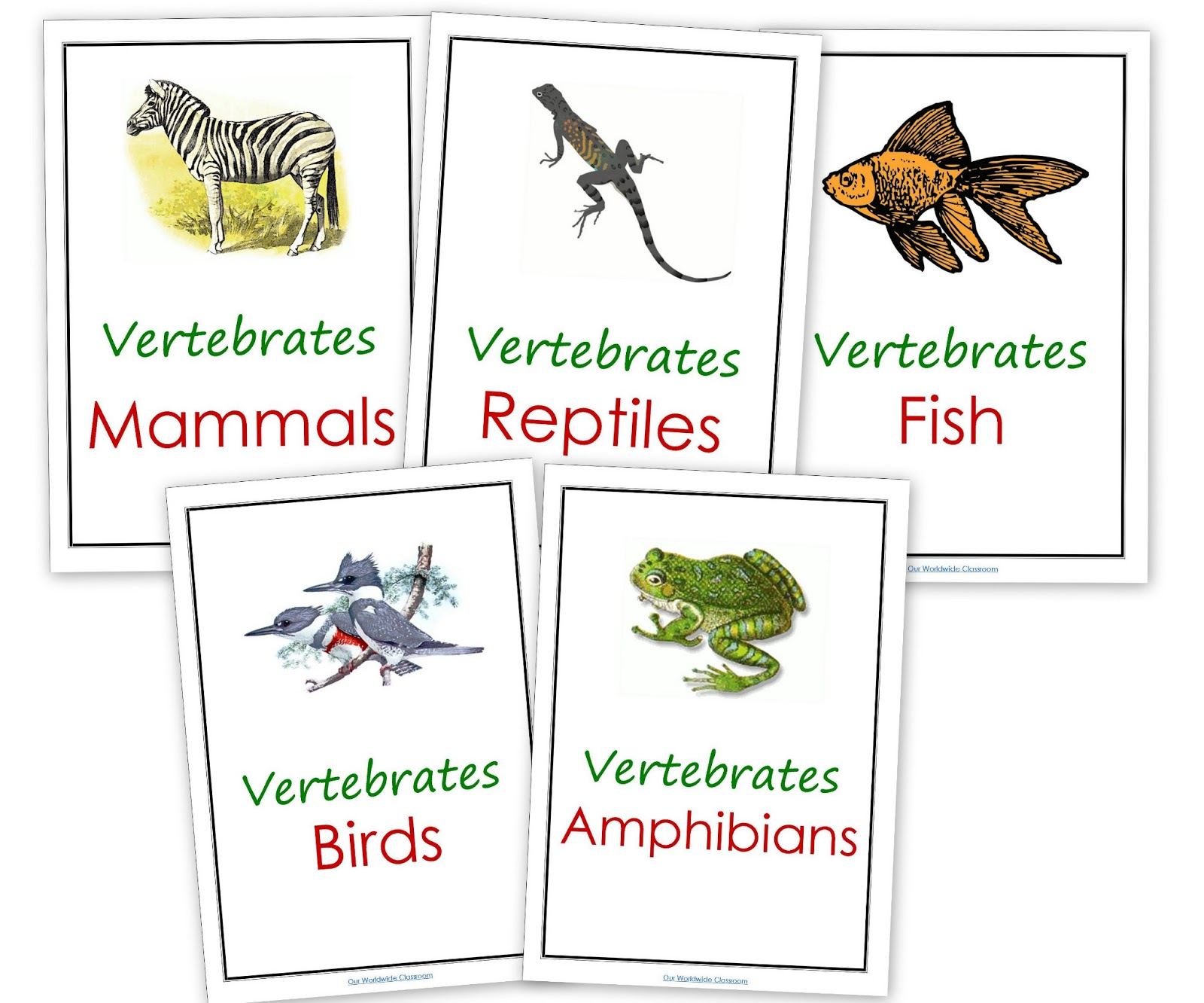 Invertebrates Pictures And Names