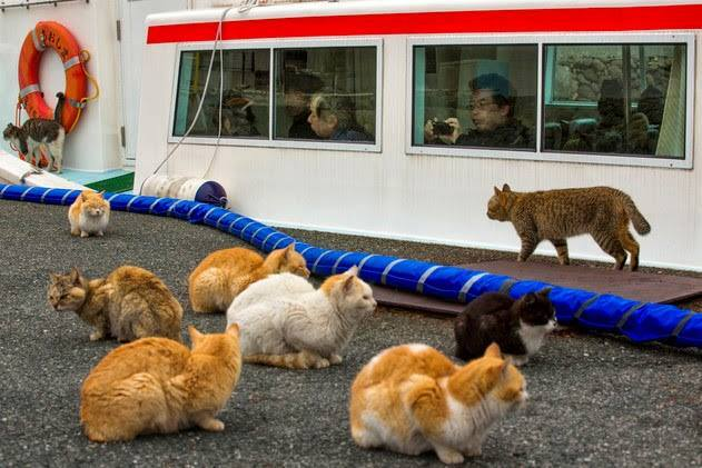 A Japanese-occupied island of cats where the number of cats six times the population of the island