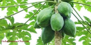 pepaya mentah, manfaat buah pepaya untuk ibu menyusui, manfaat buah pepaya untuk kesehatan dan kecantikan, khasiat pepaya muda bagi kesehatan, pepaya, buah pepaya mentah, Carica pepaya l