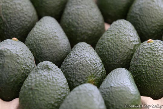 Avocados at Farmers Market, Hawke's Bay Showgrounds, Hastings. photograph