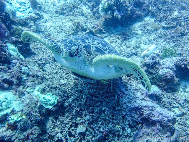 Coral Seafan - Gili Meno - Bali Lombok