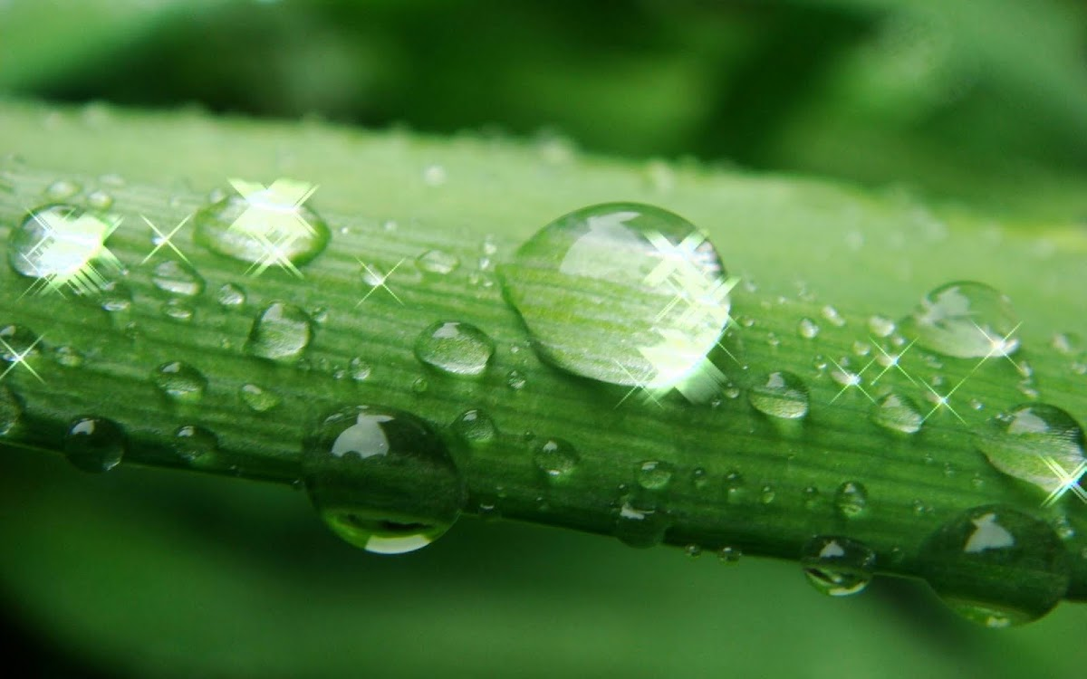 Amazing Water Drops Widescreen HD Wallpaper 8
