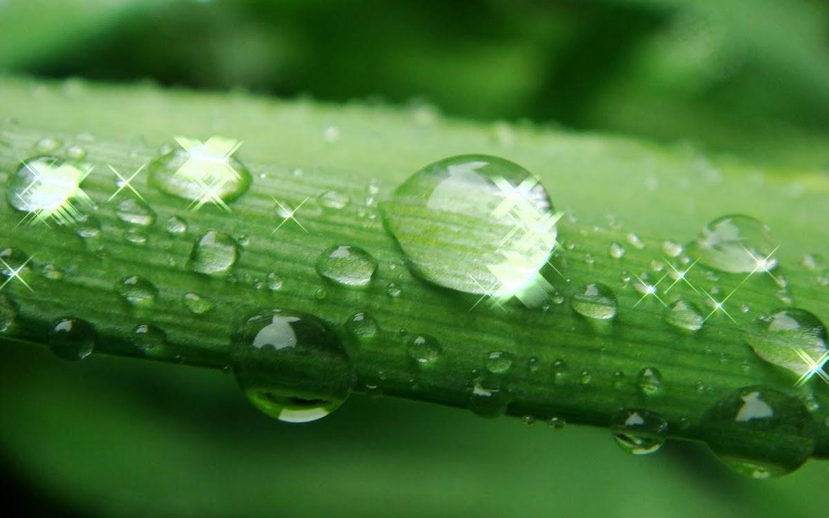 Wallpaper Selena Gomez Hd Amazing Water Drops Wallpapers