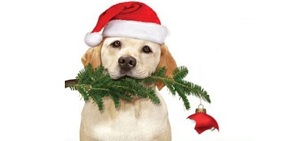 The Dog Who Saved Christmas (2009)-Watch Disney Movies Online Free