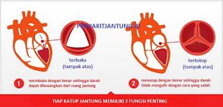 Katup Jantung dan Sistem Sirkulasi Darah
