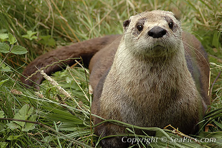 Otter Cute Wallpaper Steady Mobbin Best If You Pretend This Is Like A Picture