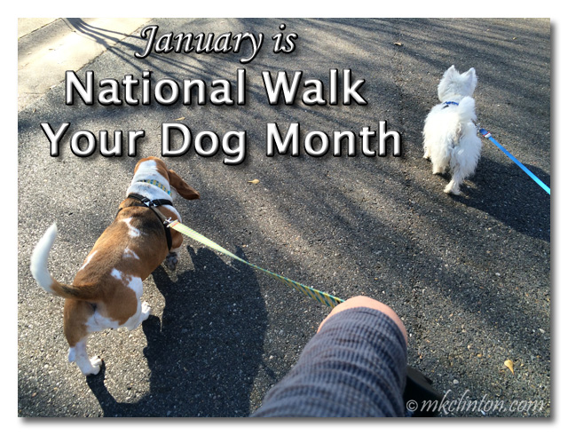 Bentley Basset and Pierre Westie walking. January is National Walk Your Dog Month.
