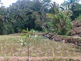Foto1576+(FILEminimizer) Jual Tanah Murah 40 Rb/m2 Di Puncak, Luas 20 Ha Jual tanah di cipanas jual tanah di puncak jual tanah di sukaresmi