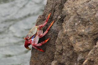 14 Fakta & Informasi Menarik Tentang Kepiting