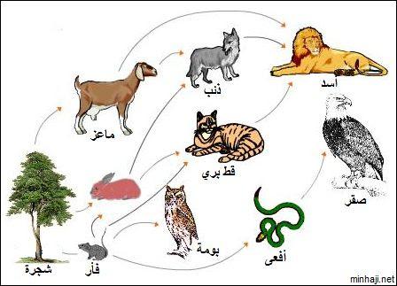 السلسلة الغذائية عند الحيوان